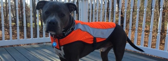 4 Cool, Must-Have, High Visibility Doggie Gear Products